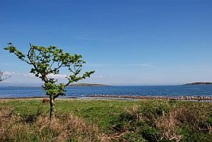 Lonely Tree Small Isles Bay Jura