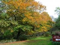 autumn-colours-near-jura-house