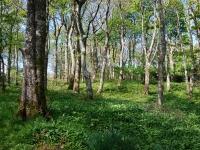 jura-house-woodland