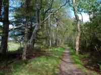 jura-house-woodland2